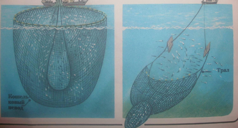 виды рыболовных тралов